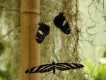 Three Butterflies by Hansmar