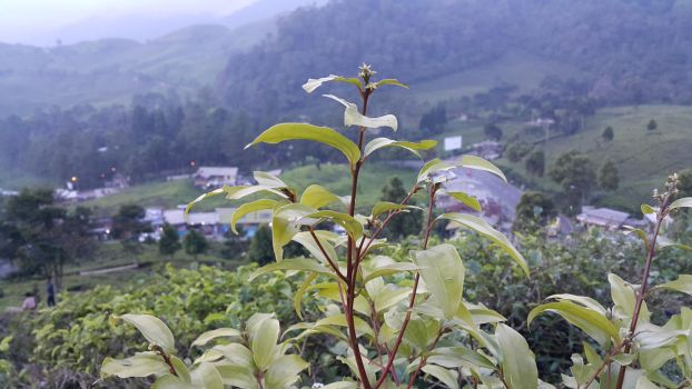 Up From The Tea Hill by lintang1412