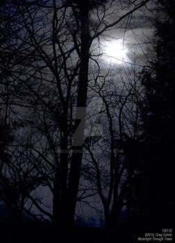 Moonlight Through Trees by GregoriusU