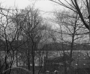 Black and White Trees