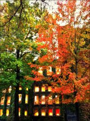 Fall in U of T by GirlinTranslation