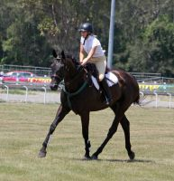 STOCK Showjumping 374 by aussiegal7