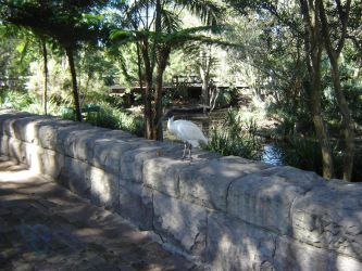 Ibis on a stone ledge by extramaster