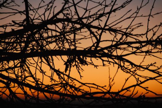 Apple Tree with Dawn by langsam