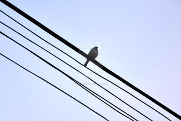 Bird on The Strings by imicomputer