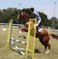 STOCK Showjumping 410 by aussiegal7