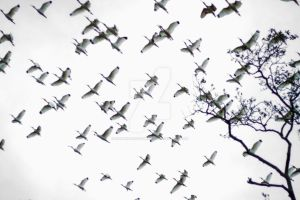 Birds by Holmes-Photography