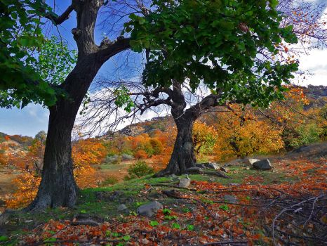 autumn colours by inocent