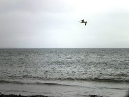 Lonely seagull by tinuvielluthien