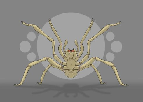 The Spider by GarrettRS