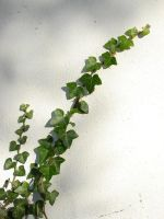 Ivy I by two-ladies-stocks