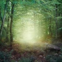 Forest by CAStock
