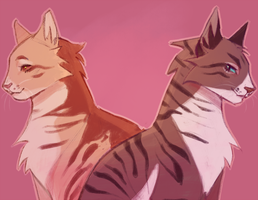 mothwing and hawkfrost by Shimmerspirit