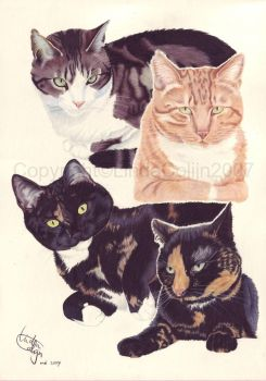 The Kuilman Cats by LindaColijn