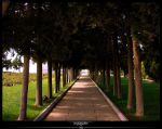 road to_  II by psycoupe