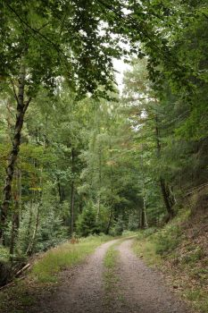 Forest Stock 148 by Malleni-Stock