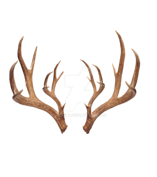 Antlers -png by juciely