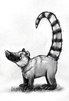 Coati by Grion