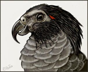 Pesquet's parrot by Reptangle