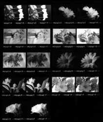 Flowers Contact Sheet by digitalblue
