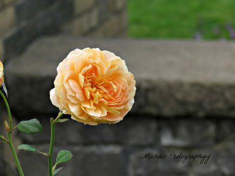 Orange Flower by Michies-Photographyy