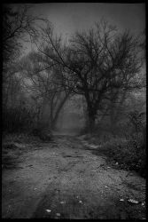 Woods 1 by ghostrider-in-ze-sky