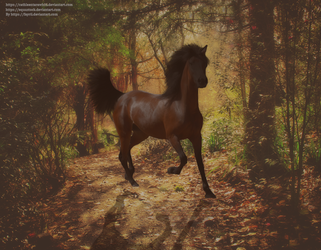 Bay Mare In Forest by Fayrii
