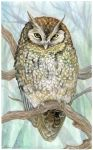 Screech Owl in ink + acrylic by LisaCrowBurke