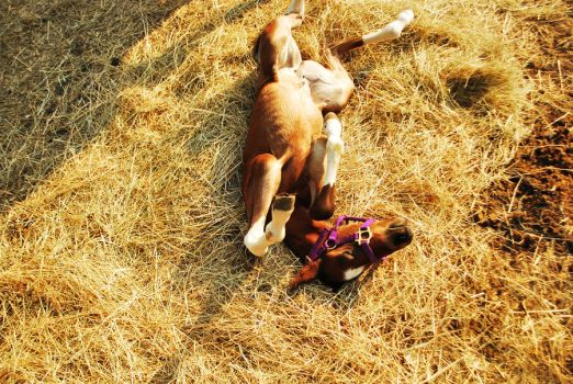 New  Born Horse by SublimeBudd