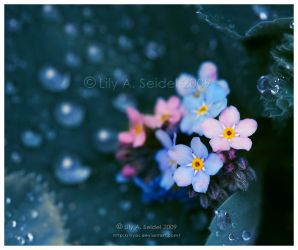 After Rain by Lilyas