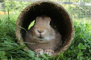 Bunny In The Tube by wuestenbrand