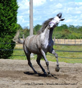 Calabria - Stock 7 by Horses--Stock