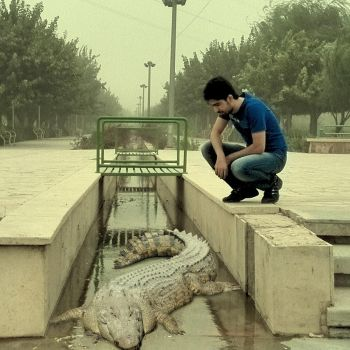my brother and crocodile , A stormy day by omidelmian