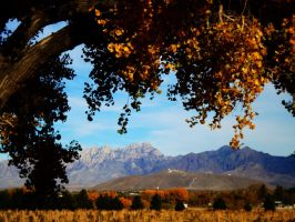 New Mexico and the Aggies by SharPhotography