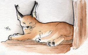 Pompous Caracal by Caravaggia