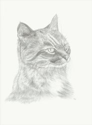 Portrait - Pussy Willow by sle86