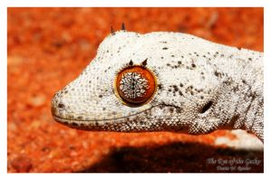 The Eye of the Gecko by shaggz86