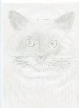 C'est beau un chat by Helena-Lullaby