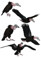 Vultures PNG Stock by Roy3D