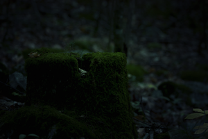 stump in the woods by ciseaux