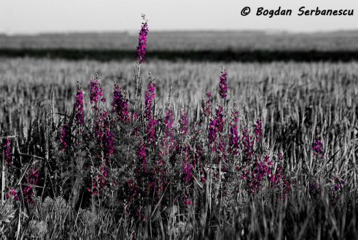 Field flowers by bogdancta