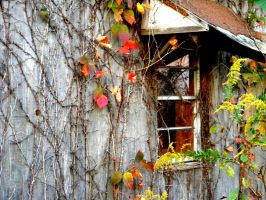 Fall Leaves on Mr. Bob's Shed by deep-south-mele