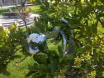 Scalemail Snake - Relaxing in Tree