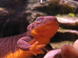 Up close with a Newt by Sunspot01