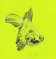 Green fish by wiegand90