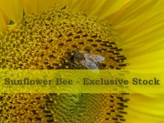 ExclStock Sunflower Bee by Gwathiell