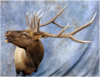 Sound the Bugle Now by WeirdCityTaxidermy