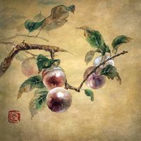 Plum tree by Sidemaze