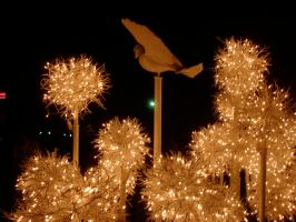 Christmas Lights and Dove Epcot 4 by WDWParksGal-Stock