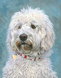 Daisy the Labradoodle by NewAgeTraveller